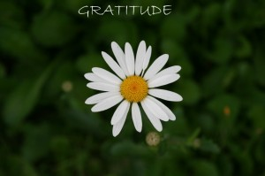 Gratitude-photo