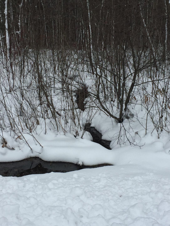 Nov MN Creek