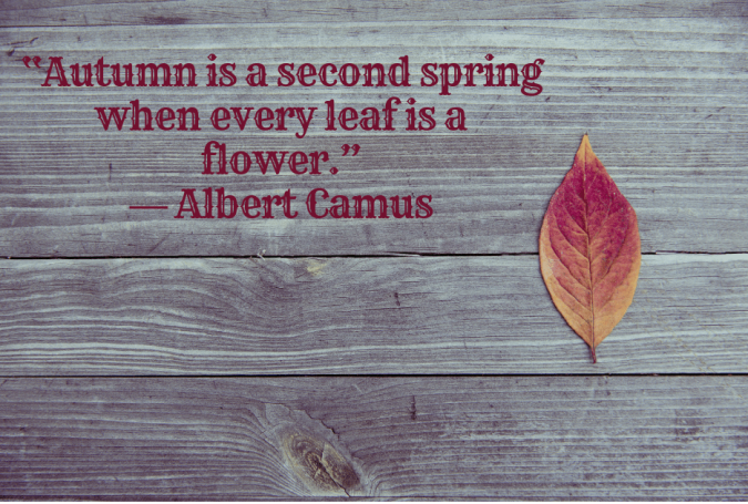 """Autumn is a second spring when every leaf is a flower."" ― Albert Camus"